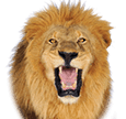 Автомат онлайн Lion's Roar